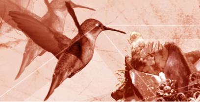 Google Hummingbird Algorithm Update